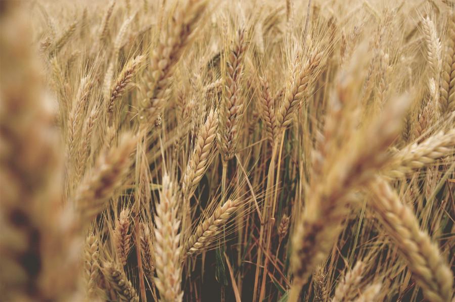 Węglowodany w niedoczynności tarczycy produkty zbożowe dieta w niedoczynności tarczycy
